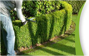 Abonnement annuel pour entretien des jardins