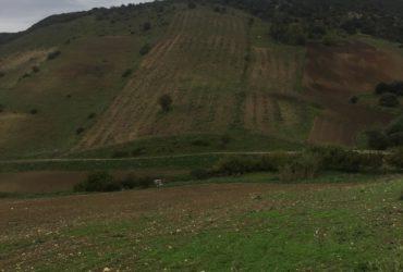 A vendre terrain agricole Bizerte Mateur 54809728