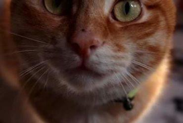 Cherche quelqu'un pour garder chat