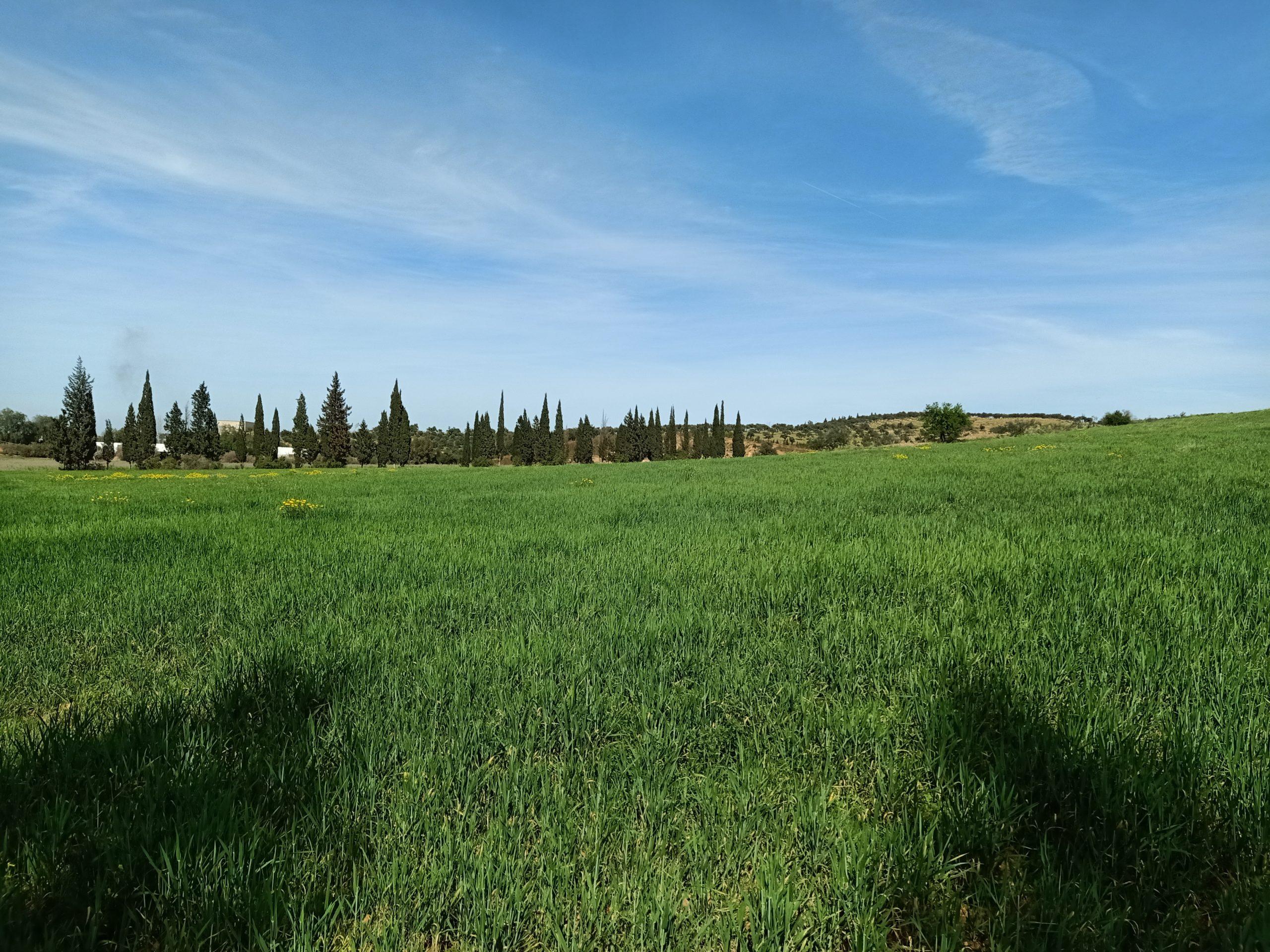 3 hectares à sidi thabet