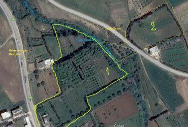 terrain agricole à Saadène (ghar el melh)