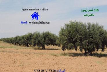 للبيع سانية علي الطريق الرئيسي طريق تونس