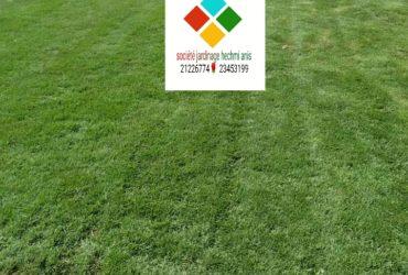 21226774 vente et pose gazon naturelle américaine kikiyou pasaplum décoration jardin